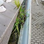 Weeds and Moss Growing in Gutters